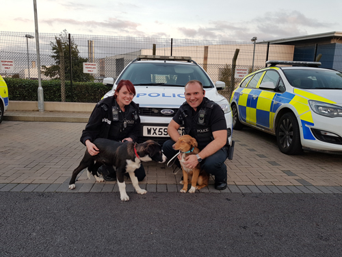 Puppies home again safely after being snatched from garden